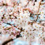 堂々完結!『春の呪い』2巻感想【ネタバレ注意】