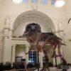 【シカゴ】フィールド博物館で世界最大のTレックスの化石に会ってきた!