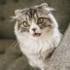 動物好きは読んで~!動物擬人化マンガ『タレソカレ』の感想と魅力を紹介
