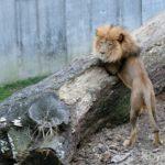 【セントルイス】地元人気No.1!入場無料の巨大動物園へ行こう。アメリカならではの動物も。