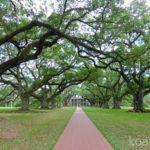 【ニューオーリンズ】プランテーションツアーでかつての南部の繁栄と奴隷労働の実態を知る。樫の並木道が美しいオークアレイ・プランテーションを紹介。