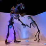 【ヒューストン】自然科学博物館に行こう。テキサスらしさ溢れるワイルド展示に大興奮!